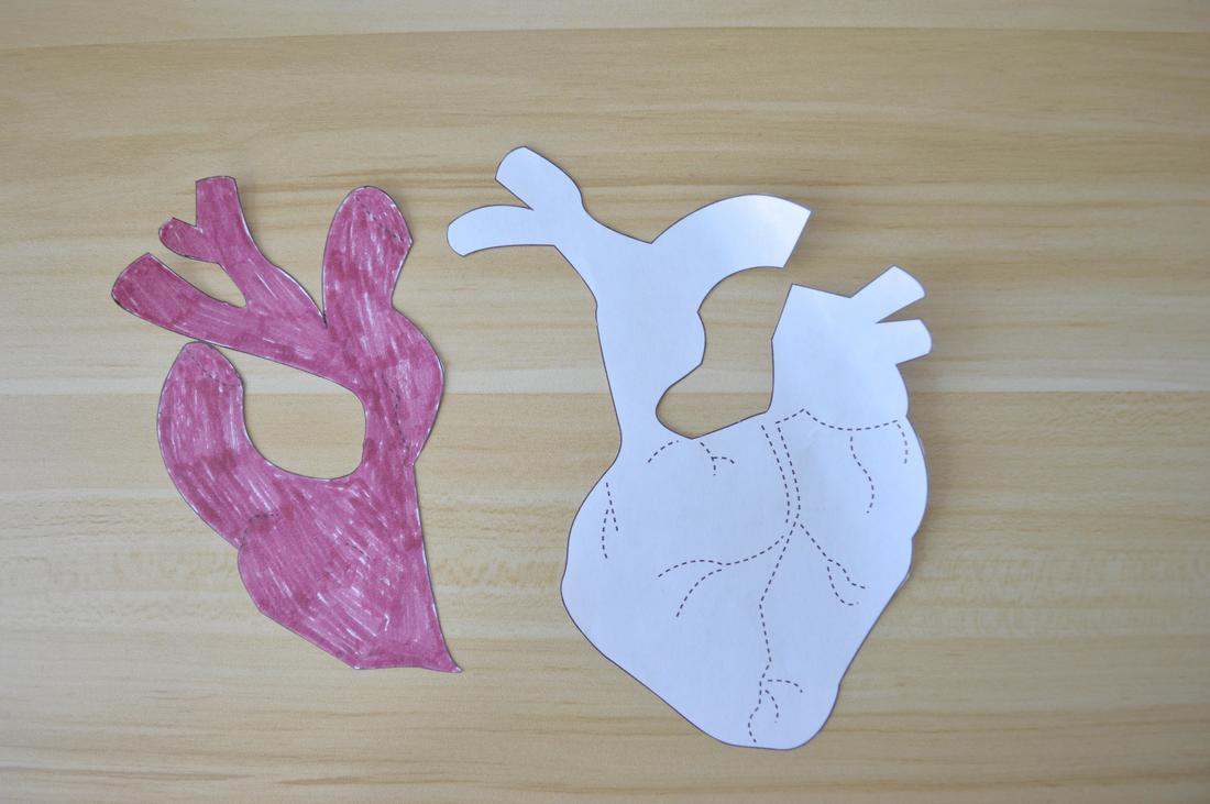 anatomical heart pdf pattern
