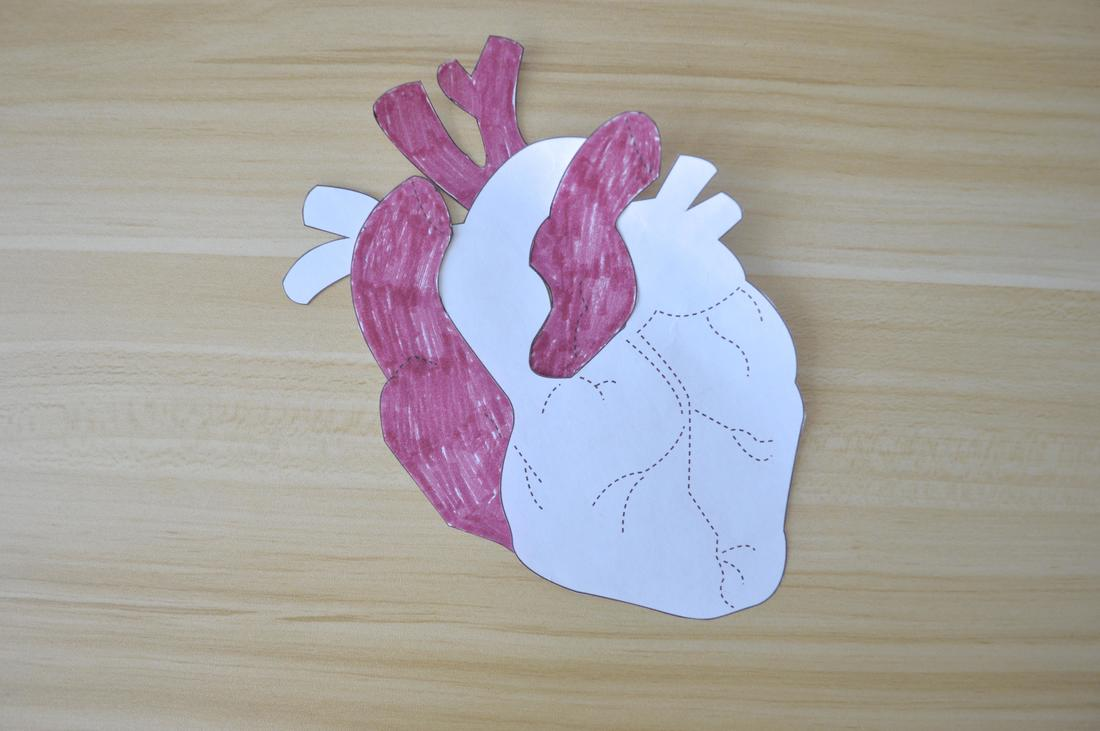 anatomical heart sewing pattern